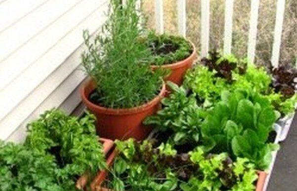 λαχανικά και αρωματικά